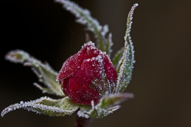 Frost018